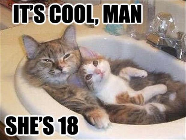 funny cats (16)