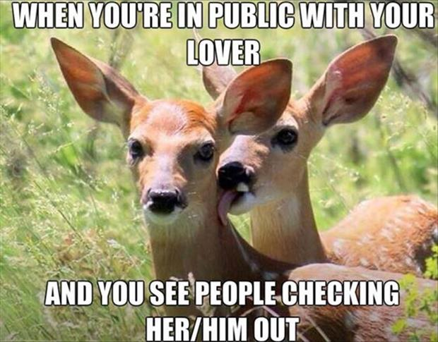 funny deer licking you