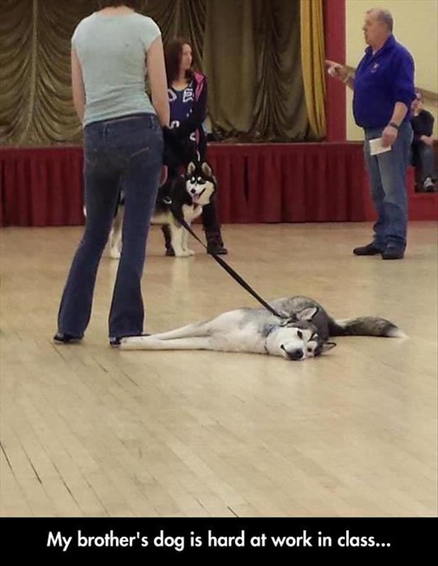 funny dog classes