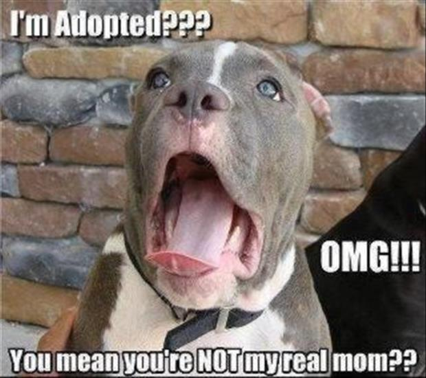 funny dogs (27)