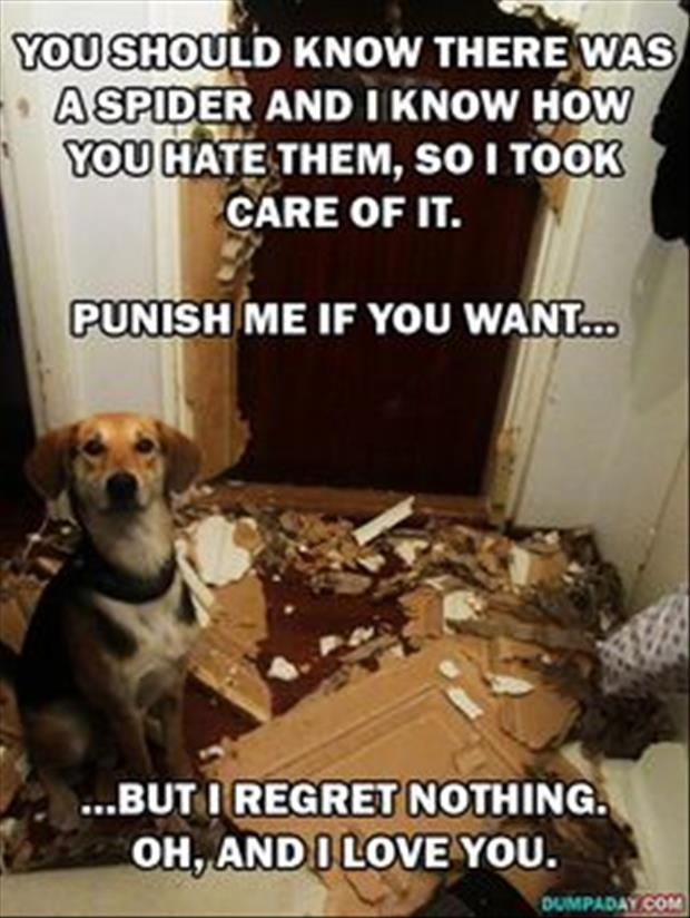 funny dogs (28)