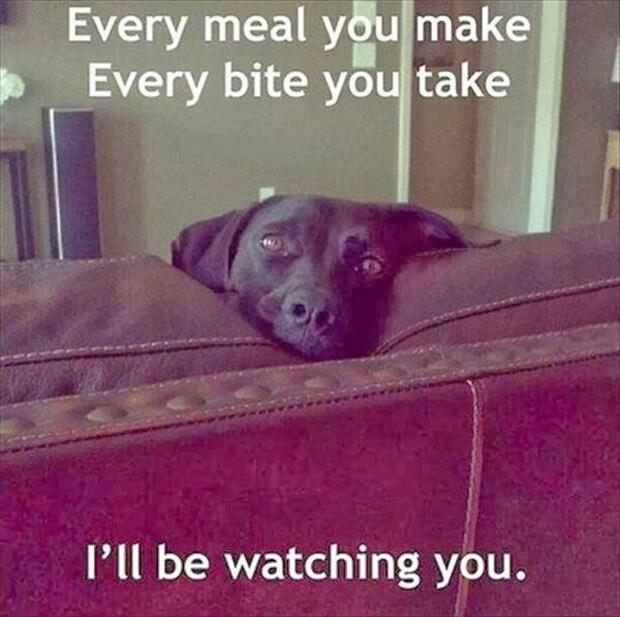 funny dogs (9)