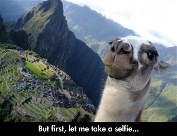 let me take a selfie