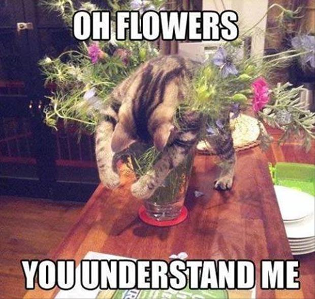 oh flowers you understand me
