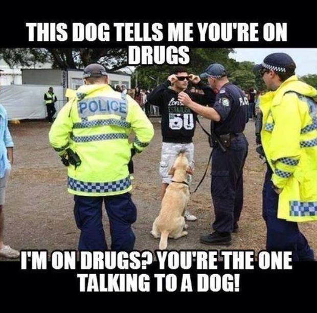 talking dog tells me you're on drugs