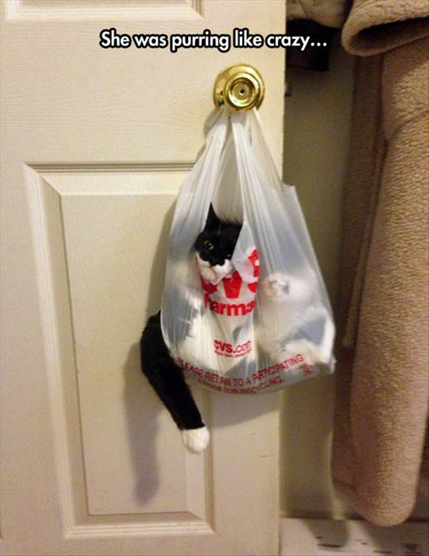 the cat in the sack