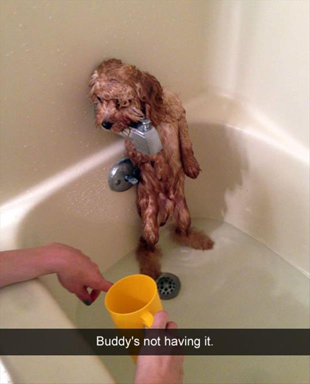 the dog hates bath time