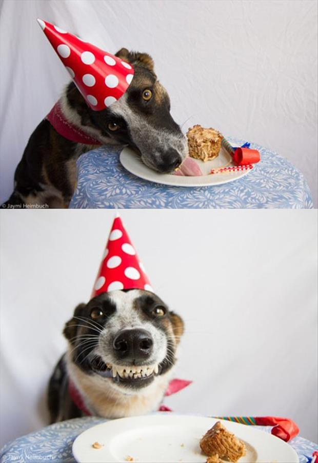 the dog loves cupcakes