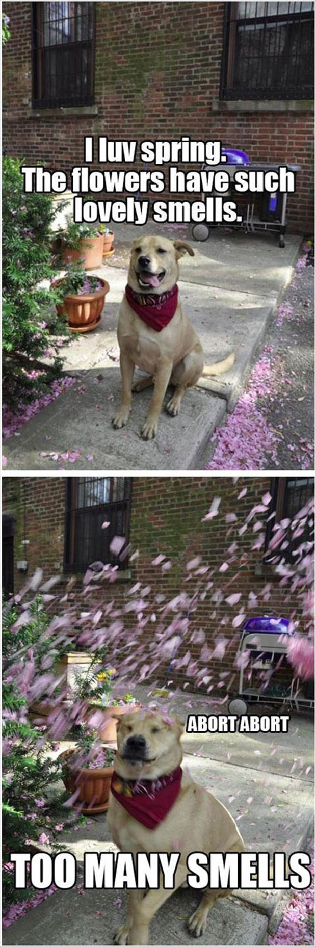 the dog loves spring time