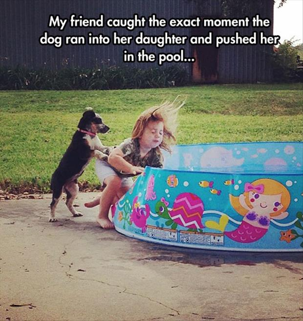 the dog pushes a kid into a pool