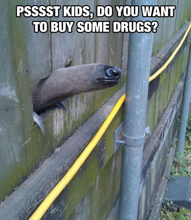 you want to buy some drugs