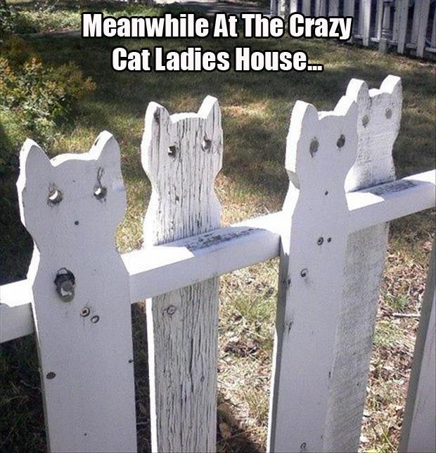 z funny pictures (46)