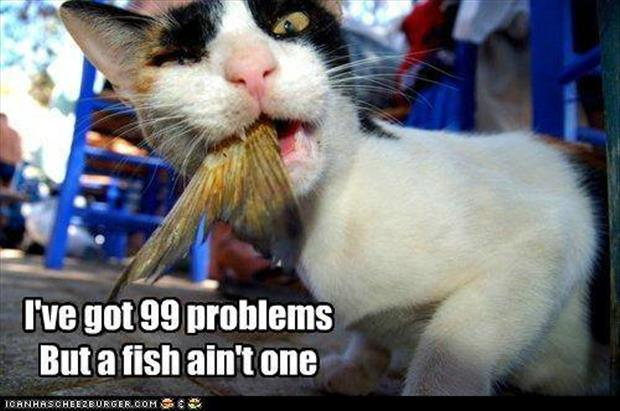 I got 99 problems cat