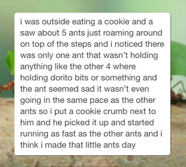I made an ant happy