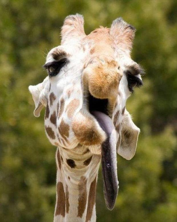 animals that look like miley cyrus (1)