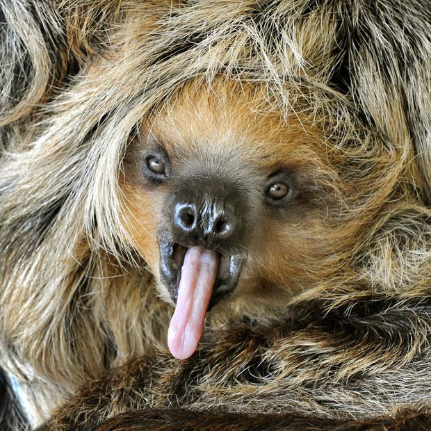 animals that look like miley cyrus (10)