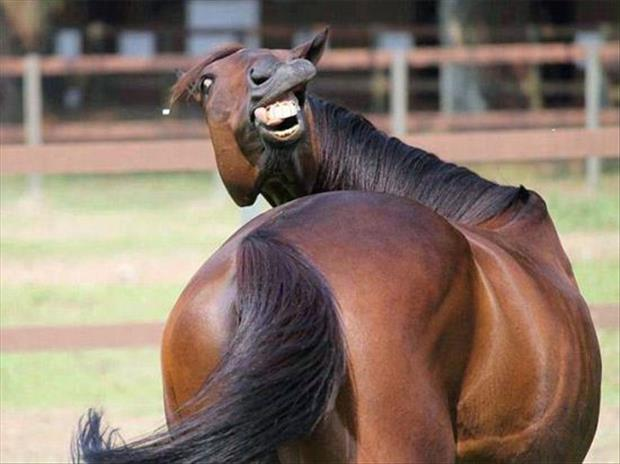 animals that look like miley cyrus (2)