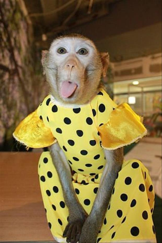 animals that look like miley cyrus (9)