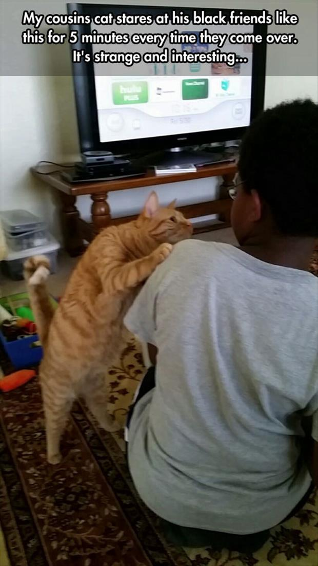 cat does not like black people