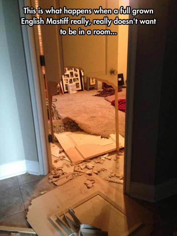 dog doesn't want to be in a room