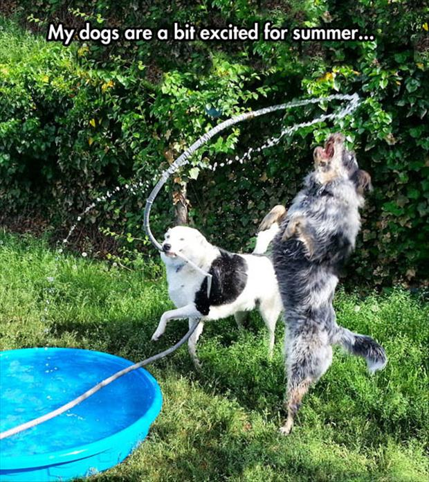 dogs love summer