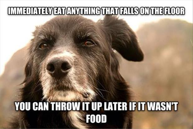 eat anything that falls on the floor