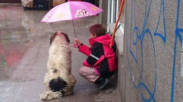 faith in humanity restored (15)