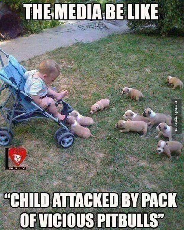 funny child attacks