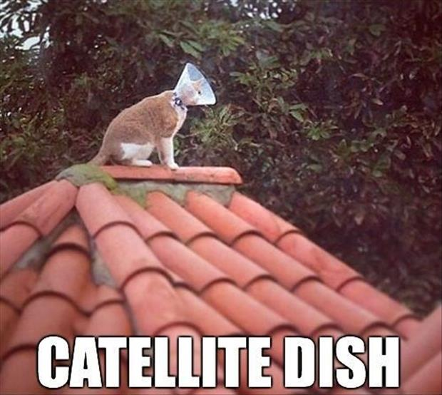 funny dishes