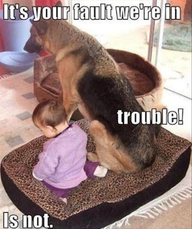 funny dogs (1)