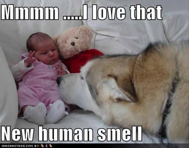 funny dogs (12)