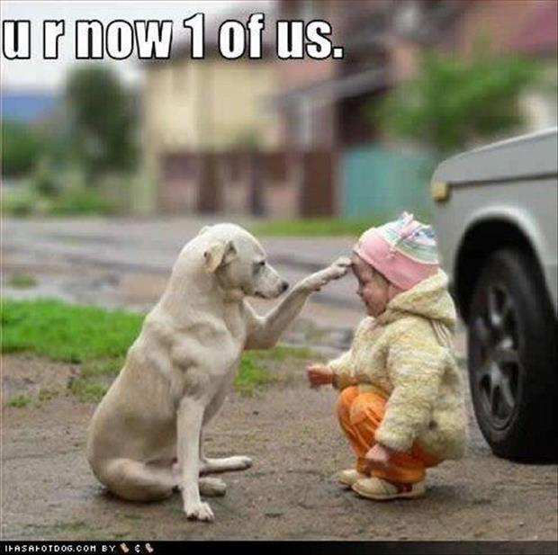 funny dogs (13)