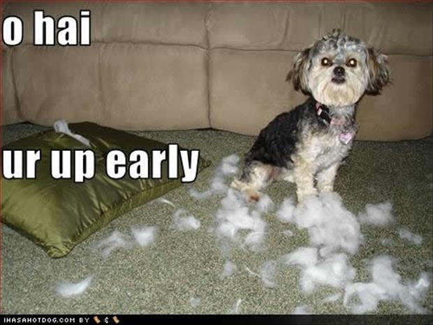 funny dogs (14)