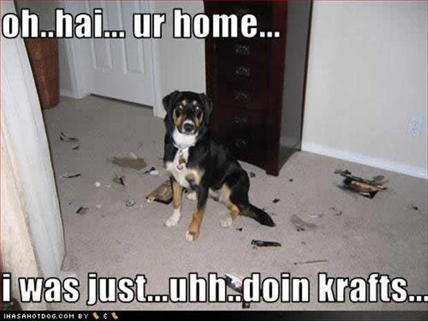 funny dogs (15)