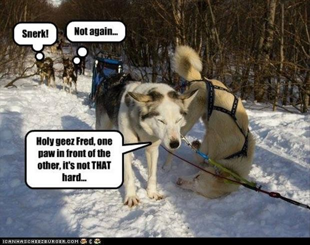 funny dogs (17)