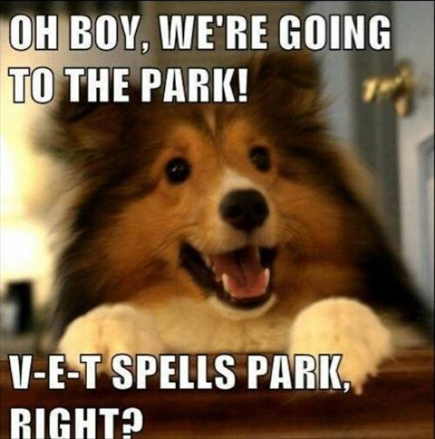 funny dogs (2)