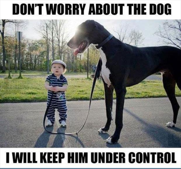 funny dogs (21)