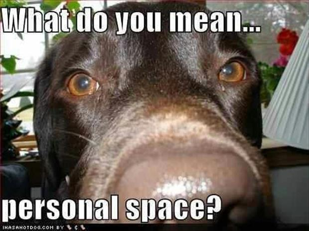 funny dogs (26)
