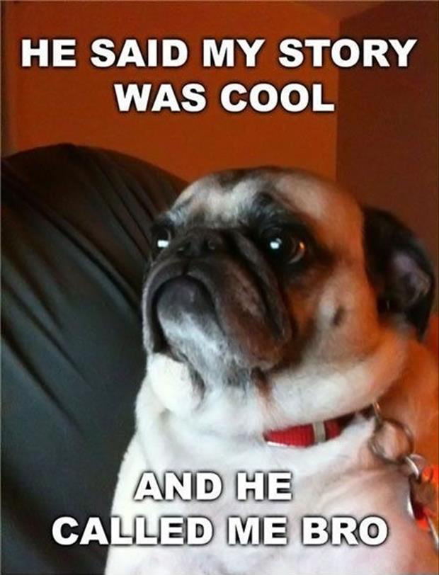 funny dogs (29)