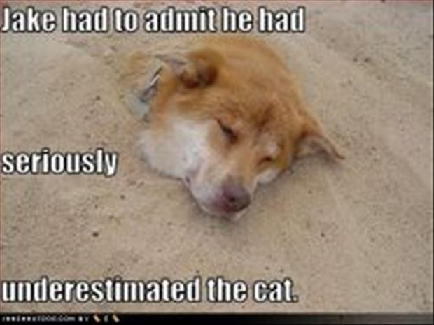 funny dogs (31)