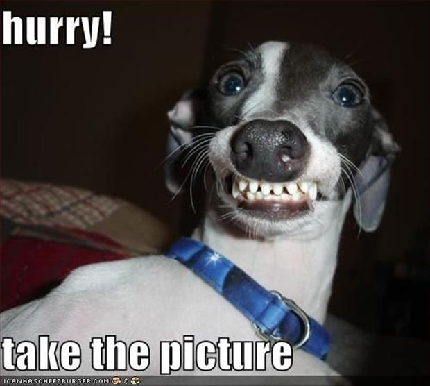 funny dogs (33)