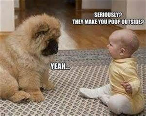 funny dogs (6)