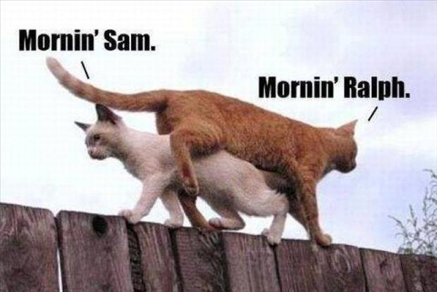 how cats say good morning