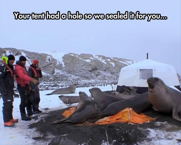 how to fix a hole in your tent