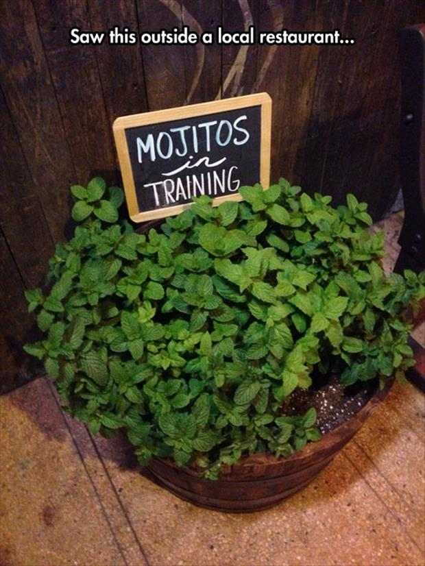 mojitos in training