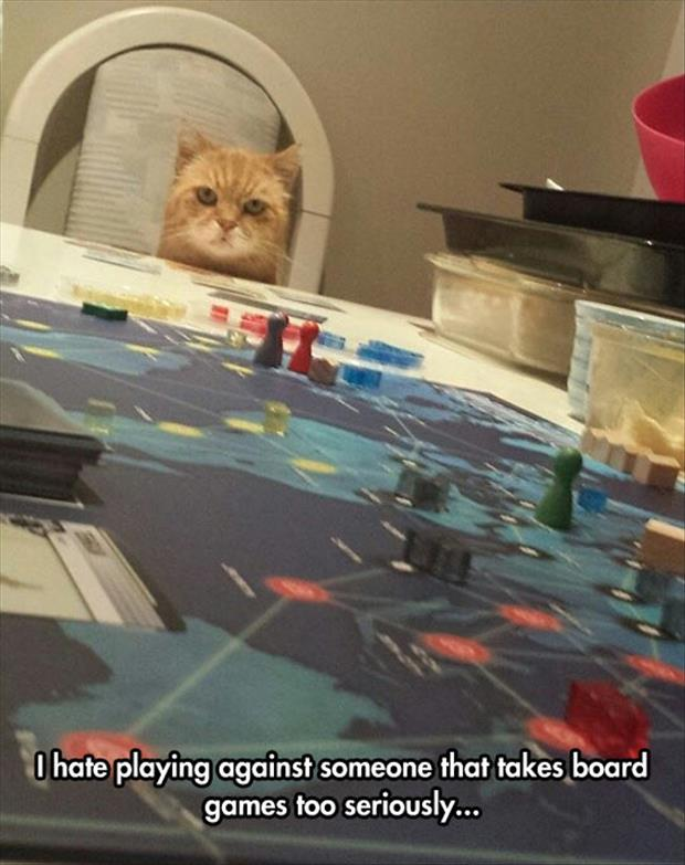 playing a game with the cat