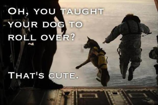 teach your dog how to jump out of a plane
