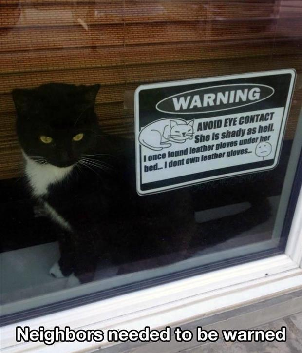 the angry cat