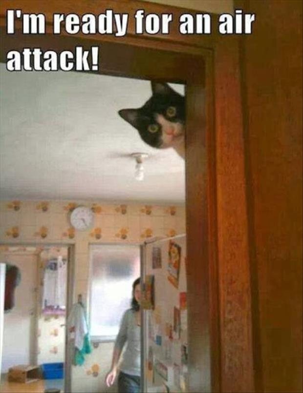 the cat's air attack
