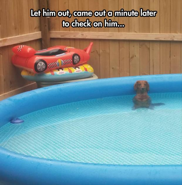 the dog loves the pool